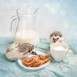Erizos divertidos cerca de una taza de leche foto de archivo libre de regalías