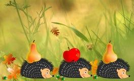 Erizos en otoño, en el jardín o en el campo stock de ilustración