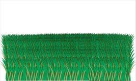 Erläutertes Gras auf weißem Hintergrund Lizenzfreie Stockfotos