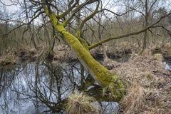 Erlenbruch, Carr Palude nella primavera in anticipo Fotografie Stock