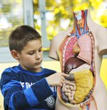 Erlernen Sie Biologie in der Schule stockbild