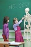 Erlernen Sie Biologie in der Schule lizenzfreie stockfotos