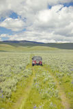 Ermüden Sie Bahnen durch Frühlingsblumen des hundertjährigen Tales nahe Lakeview, M.Ü. Stockbilder