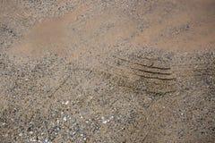 Ermüden Sie Spur auf dem Kies neben Wasser im Schlagloch am geregneten Tag Lizenzfreie Stockfotos