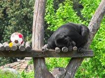 Ermüdet nach dem Match Stockfoto