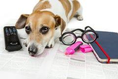 Ermüdet für das Suchen nach Job Lizenzfreie Stockbilder