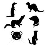 Ermine set vector. Ermine set of silhouettes vector vector illustration
