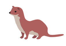 Ermine or Weasel Vector Flat Design Illustration Royalty Free Stock Photography