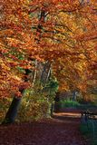 Ermitage一条美丽的秋天道路的垂直的看法在Arlesheim 免版税库存照片