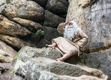 Ermite barbu dans les roches Photos stock