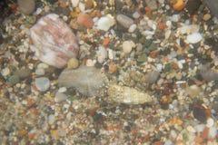 Ermite de crabe de nature de plage d'été de Leucade Grèce Photo libre de droits