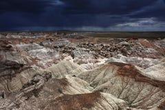 Ermo do deserto pintado em Forest National Park hirto de medo, o Arizona imagem de stock