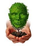 Ernähren Sie Wachstum Lizenzfreies Stockbild