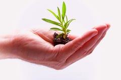 Ernährung der Natur Lizenzfreies Stockfoto