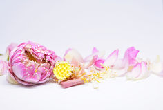 Ernährungseigenschaften des rosa Lotos Stockfoto