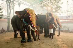 Man prepare elephants for hindu festival at Siva temple in Ernak royalty free stock images
