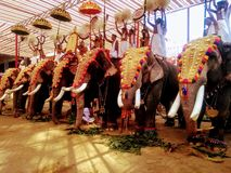 Elephant pooja at shiva temple utsav royalty free stock photography