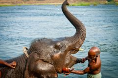 ERNAKULUM, INDIA - MARCH 26, 2012: Trainers bathing elephants from the sanctuary. Stock Photo