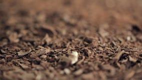 Erneut konzentrierender Makroschuß auf Schokoladensplittern stock footage