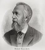 Ernst Haeckel. Ernst Heinrich Philipp August Haeckel (1834 - 1919) was an eminent German biologist, naturalist, philosopher, physician, professor and artist who Stock Photo