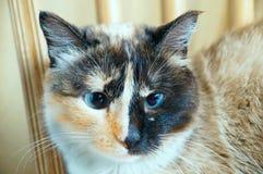 Ernste Katze Lizenzfreie Stockfotos