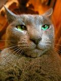 Ernste Katze Lizenzfreies Stockfoto