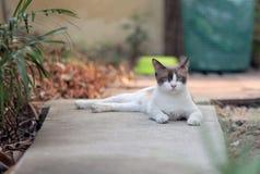 Ernste Katze Stockfoto