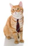 Ernste Katze mit einer Bindung Lizenzfreie Stockfotos