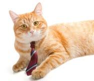 Ernste Katze mit einer Bindung Lizenzfreie Stockbilder