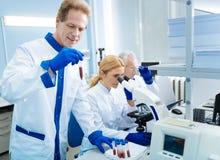Ernste Wissenschaftler, die im Team arbeiten Stockfoto