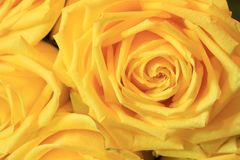 Ernster Blumenstrauß von Blumen für schöne Damen, Bündel Rosen stockfoto