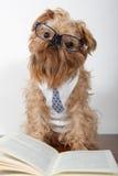 Ernster Hund in den Gläsern lizenzfreies stockbild