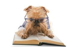 Ernster Hund in den Gläsern ein Buch lesend lizenzfreies stockbild