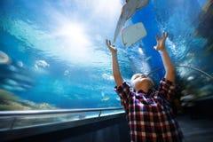 Ernster Junge, der im Aquarium mit tropischen Fischen schaut stockfotografie