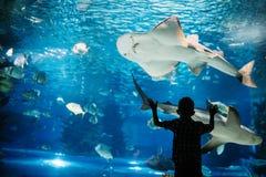 Ernster Junge, der im Aquarium mit tropischen Fischen schaut lizenzfreie stockfotos