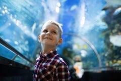 Ernster Junge, der im Aquarium mit tropischen Fischen schaut stockbild