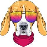 Ernster Spürhund Hund des Vektorhippies in den Gläsern Stockfotos