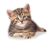 Ernstes Kätzchen Stockbild