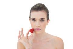 Ernstes natürliches braunes behaartes Modell, das eine Erdbeere hält Stockfotografie