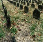 Ernstig patroon in begraafplaats stock foto's