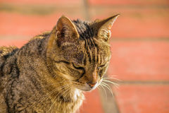 Ernstige Cat Foreground Stock Foto's