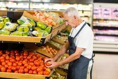 Ernstige hogere arbeider die tomaat nemen royalty-vrije stock foto
