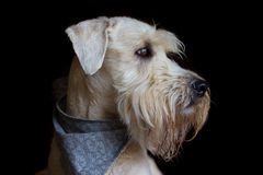 Ernstige hond royalty-vrije stock foto's
