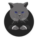 Ernstige kat Stock Afbeeldingen