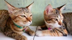 Ernstige kat Royalty-vrije Stock Fotografie