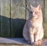 Ernstige kat Royalty-vrije Stock Foto's