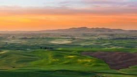 Ernte archivierte in Palouse an einem schönen Morgen Stockfotos