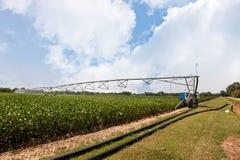 Ernte-Bewässerung unter Verwendung der Mittelgelenksprinkleranlage Stockfoto