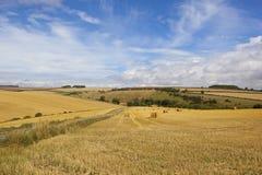 Ernte in den Yorkshire-Wolds Lizenzfreie Stockfotografie