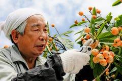 Ernte der Frucht stockbild